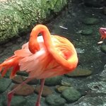 bright orange flamingos from the last portion of the exhibits
