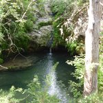 Twin Falls, a lush grove