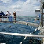 A day trip out on the Gt Barrier Reef