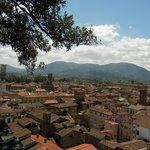 Vista da Torre Guinigi a Lucca