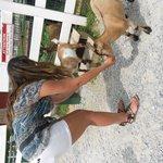 goat lovin kids