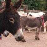 Donkeys of all descriptions