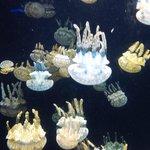 Jellyfish at Baltimore Aquarium