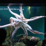 Octopus at Baltimore aquarium