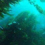 great diving