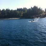 Fishing charter with whale watching too!