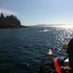 whales all around Sooke that day!