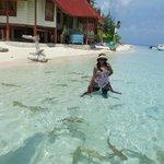 bermain bersama hiu di pantai Tinabo