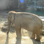 Asian elephant exhibit
