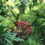 Botanical Garden Soufriere