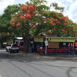 Lazy Jack's from the Malecon - Love the Flamboyan canopy!!