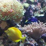 We found Nemo