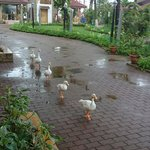 You'll fall in love with the resident ducks.