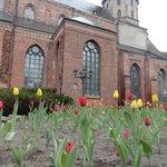 Тюльпаны у собора