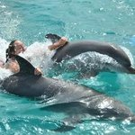 Calgon has nothing on these dolphins :)