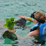 encounter with manatee