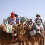 Excursion chameaux