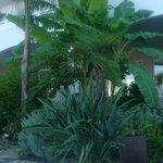 vegetazione hotel