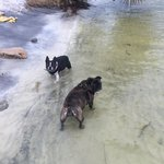 My dogs playing on bay shore at back of resort