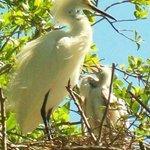Suncoast Seabird