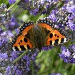 the garden is full of butterflies & bees