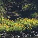 Beautiful wildflowers at the edge of the lake