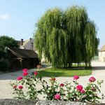 Majestic Saule tree, Courtyard and devine frangrant roses