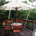 Deck from a canopy treetop house