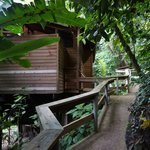 On the way to our treetop house