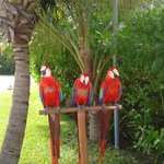 Parrots on the way to the pool