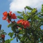 Arbre fleuri tropical dans le botanic garden