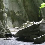 Me and my dog Taz in Cathedral Quarry