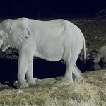 Night time at the waterhole