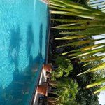 Pool (sidways)