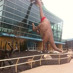 Massive dinosaur!