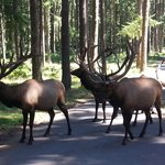 Wildlife observed during Tram Tour