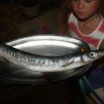 Из этой рыбины нам суп приготовили.