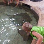 Petting stingrays