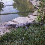 3 Palms Petting Zoo