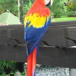 Macaw in the morning...pool area