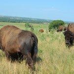Kreycik Elk & Buffalo Tours