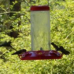 Hummingbirds on the porch--a symbol of the Blackberry