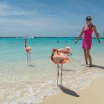 Flamingos on the private beach