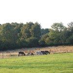 les ânes 2