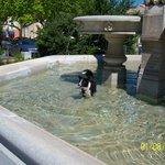 ook afkoelen in een fontein kan