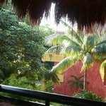tropical trees by the balcony