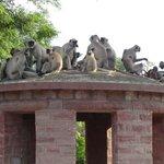Inhabitants of the Mandore Gardens