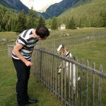 The goats are an attraction for children