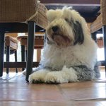 Furry friend Klio