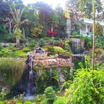 garden and waterfall